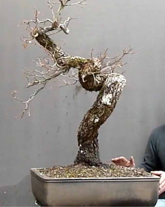 http://www.espritsdegoshin.fr/components/com_agora/img/members/2157/mini_Quercus-AtelierVirtuel1.jpg