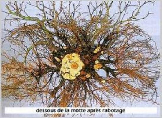 http://www.espritsdegoshin.fr/components/com_agora/img/members/2193/mini_nebari-2-taille.jpg