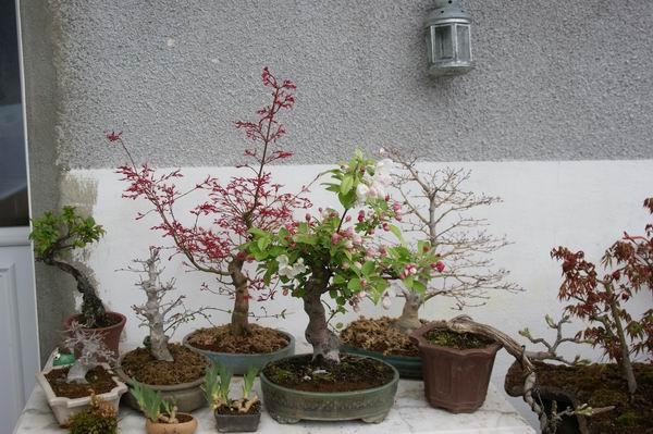 http://www.espritsdegoshin.fr/components/com_agora/img/members/2221/Resize-of-arbres-001.jpg