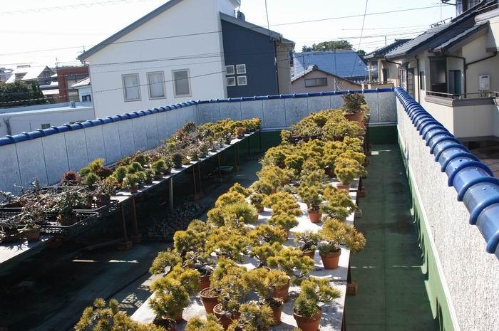 http://www.espritsdegoshin.fr/components/com_agora/img/members/2221/Resize-of-japon-482.jpg