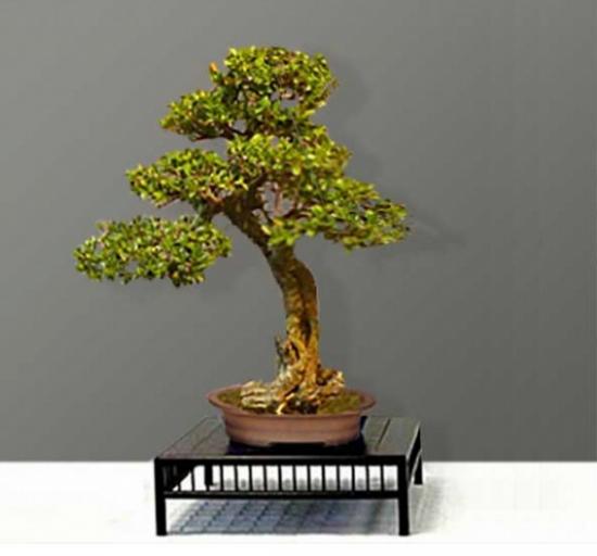 http://www.espritsdegoshin.fr/components/com_agora/img/members/2226/mini_20032018-0802_arbre3.jpg