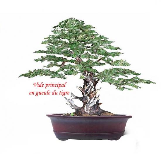 http://www.espritsdegoshin.fr/components/com_agora/img/members/2226/mini_PP.jpg