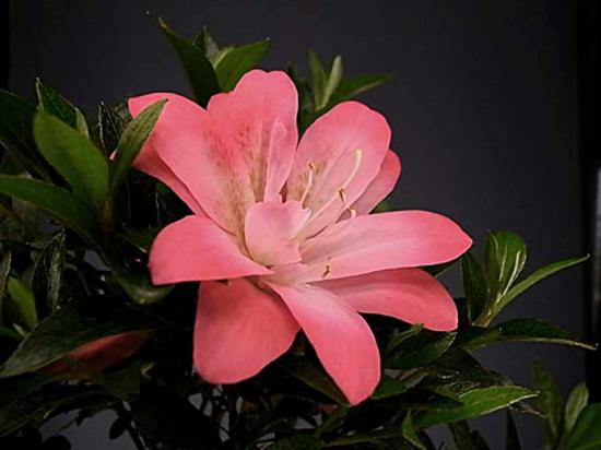 http://www.espritsdegoshin.fr/components/com_agora/img/members/2226/mini_satsuki-fleur.jpg