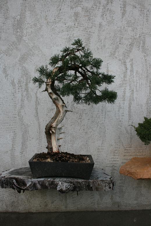 http://www.espritsdegoshin.fr/components/com_agora/img/members/2227/juniperus-001.jpg