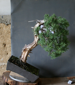 http://www.espritsdegoshin.fr/components/com_agora/img/members/2227/mini_juniperus-00156.jpg