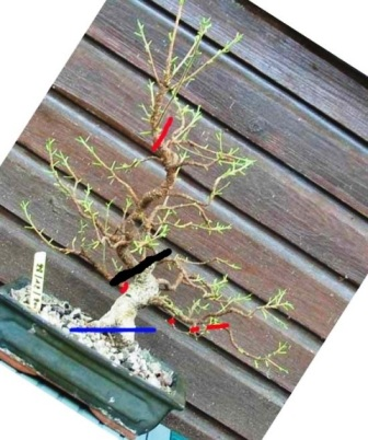 http://www.espritsdegoshin.fr/components/com_agora/img/members/2256/mini-07072011-1129-41.jpg