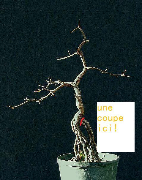 http://www.espritsdegoshin.fr/components/com_agora/img/members/2277/mini-acerm02-111031c-explication.jpg