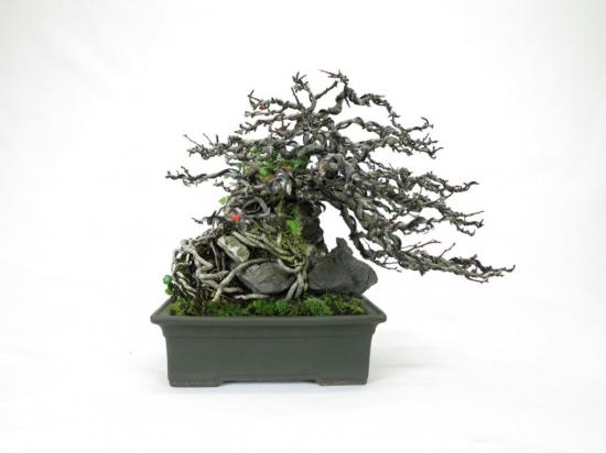 http://www.espritsdegoshin.fr/components/com_agora/img/members/2285/mini_achat-vente-bonsai-shohin-70-1024x768.jpg