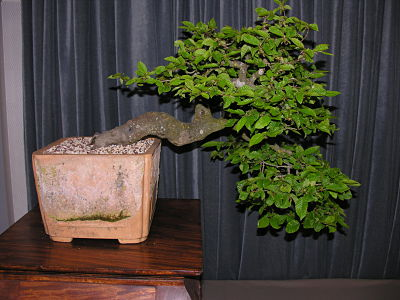 http://www.espritsdegoshin.fr/components/com_agora/img/members/2345/expo-bonsai-001-opt.jpg