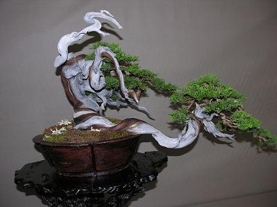 http://www.espritsdegoshin.fr/components/com_agora/img/members/2345/expo-bonsai-021-opt.jpg