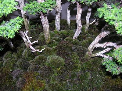 http://www.espritsdegoshin.fr/components/com_agora/img/members/2345/expo-bonsai-025-opt.jpg