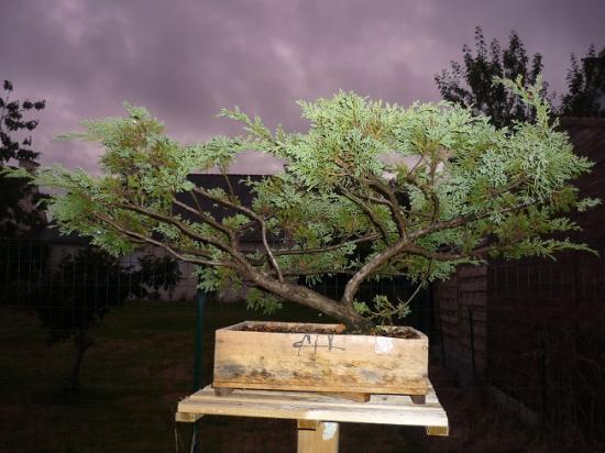http://www.espritsdegoshin.fr/components/com_agora/img/members/2362/mini_juniperus-communis.jpeg