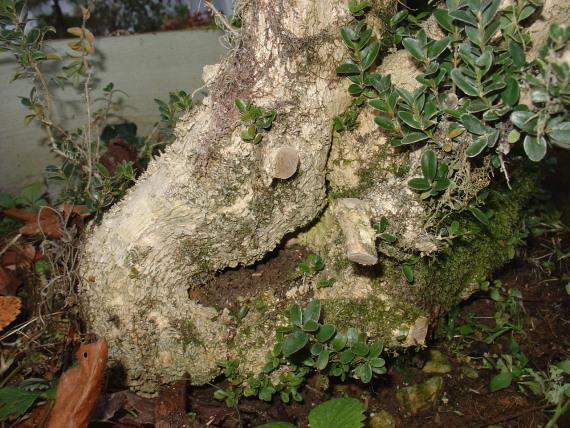 http://www.espritsdegoshin.fr/components/com_agora/img/members/2367/4buis-01-02-2009.JPG