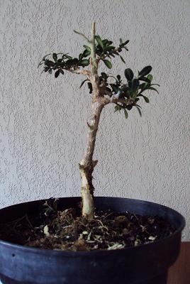 http://www.espritsdegoshin.fr/components/com_agora/img/members/2392/19012010-1719_janvier-2010-5a.jpg