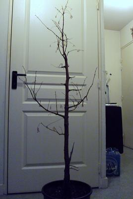 http://www.espritsdegoshin.fr/components/com_agora/img/members/2392/janvier-2010-1a.jpg