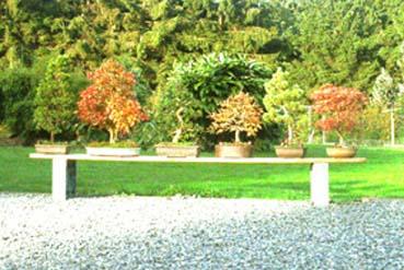 http://www.espritsdegoshin.fr/components/com_agora/img/members/25565_bonsai_edg.jpg