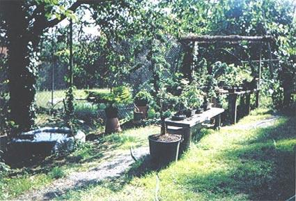 http://www.espritsdegoshin.fr/components/com_agora/img/members/25570_photo_de_bonsai_002.jpg