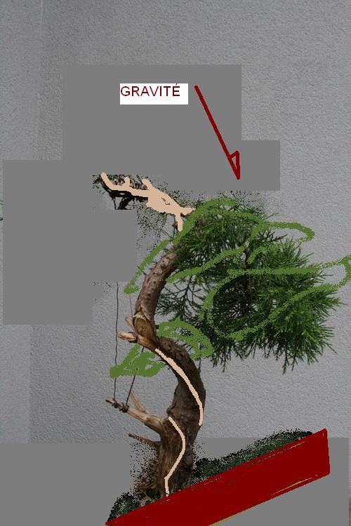 http://www.espritsdegoshin.fr/components/com_agora/img/members/2670/idee-FACE3.jpg