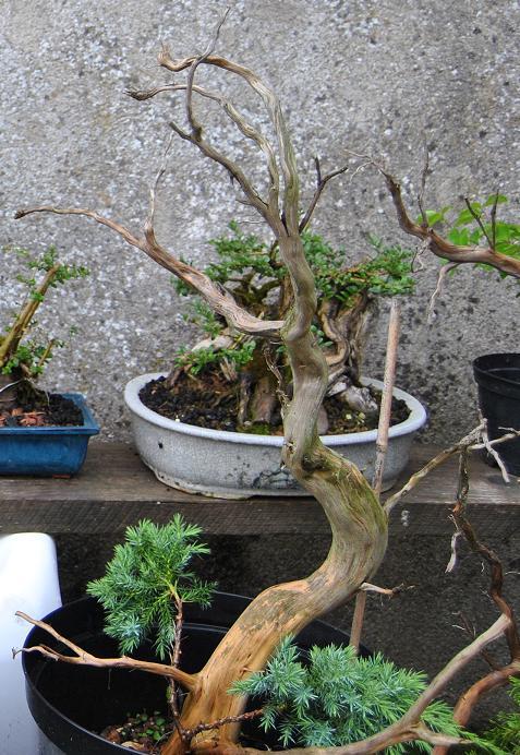 http://www.espritsdegoshin.fr/components/com_agora/img/members/2712/27mai20110-8.JPG