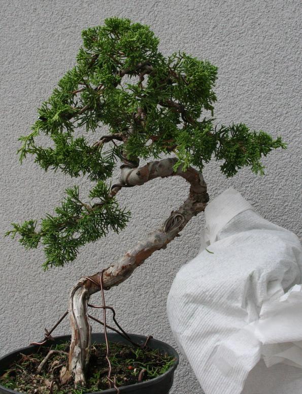 http://www.espritsdegoshin.fr/components/com_agora/img/members/2958/14072013-2008_FACE1.jpg
