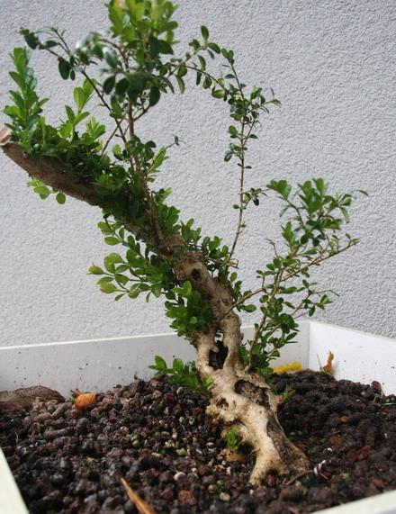 http://www.espritsdegoshin.fr/components/com_agora/img/members/2958/27092012-1642_FACE2.jpg