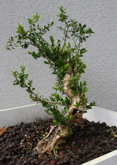 http://www.espritsdegoshin.fr/components/com_agora/img/members/2958/27092012-1643_FACE3.jpg