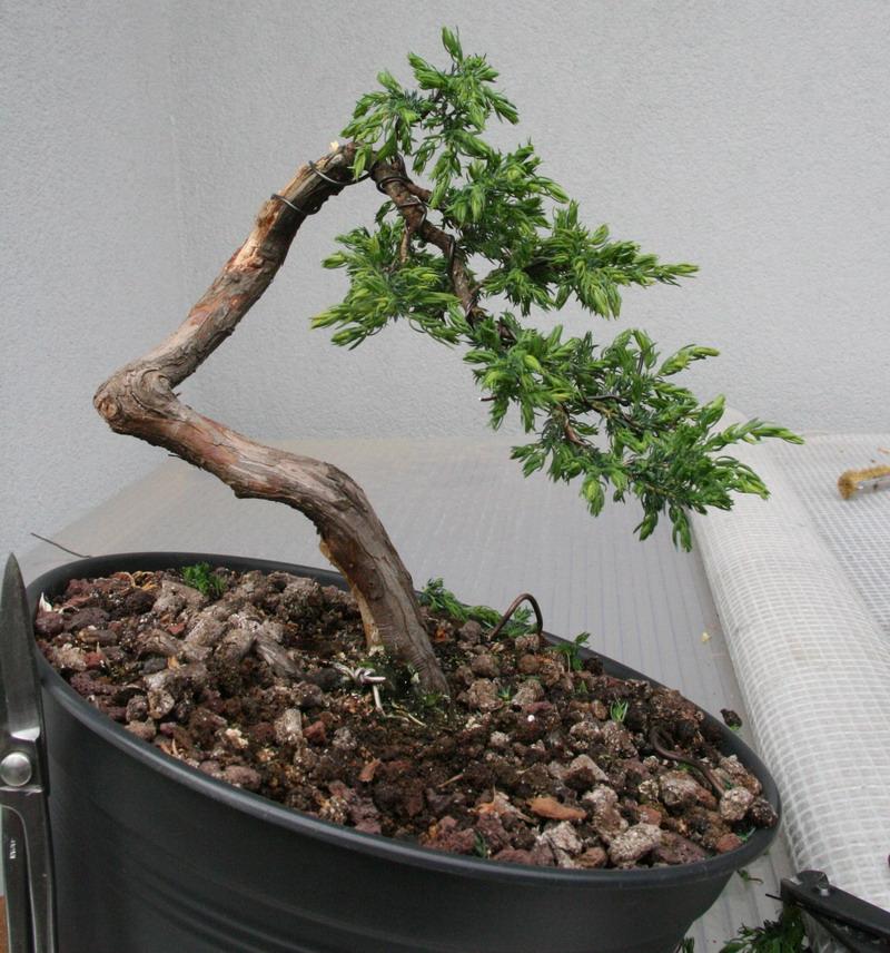 http://www.espritsdegoshin.fr/components/com_agora/img/members/2958/Mai-2012.jpg