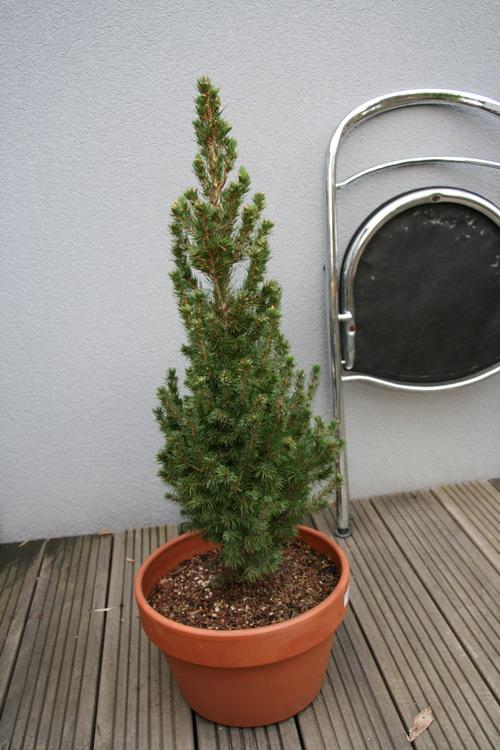 http://www.espritsdegoshin.fr/components/com_agora/img/members/2958/mars-2010.jpg