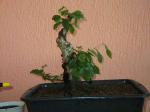 http://www.espritsdegoshin.fr/components/com_agora/img/members/30149__charme_2005_07_12_204.jpg_thumb
