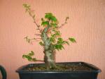 http://www.espritsdegoshin.fr/components/com_agora/img/members/30150__charme_2006_04_28_136.jpg_thumb