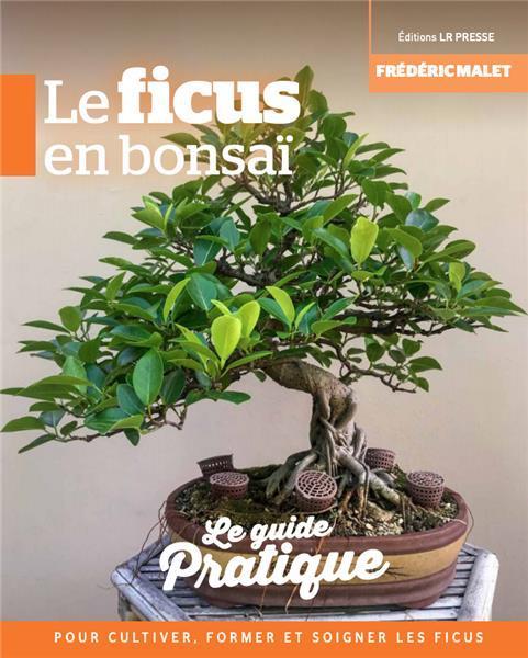 http://www.espritsdegoshin.fr/components/com_agora/img/members/3033/mini_I-Grande-11813-le-ficus-en-bonsai.jpg