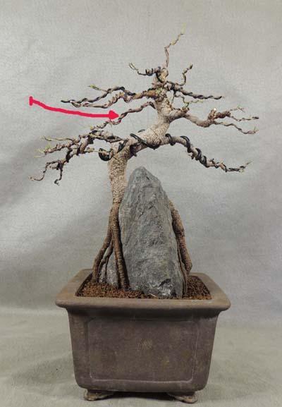 http://www.espritsdegoshin.fr/components/com_agora/img/members/3262/mini_Ficus-retusa-042015-3.jpg