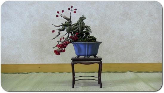 http://www.espritsdegoshin.fr/components/com_agora/img/members/3269/mini_10012012-0831_crataegus-bonsai-shohin-01.jpg