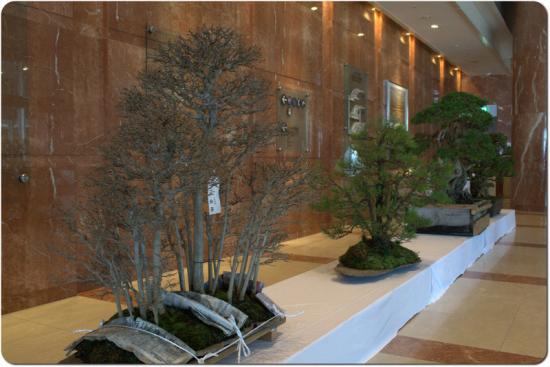 http://www.espritsdegoshin.fr/components/com_agora/img/members/3269/mini_aspac-demonstration-tree-08.jpg