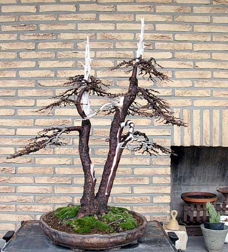 http://www.espritsdegoshin.fr/components/com_agora/img/members/33417_arbre-1.jpg