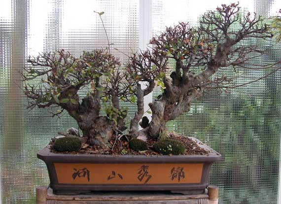 http://www.espritsdegoshin.fr/components/com_agora/img/members/33418_arbre-2.jpg