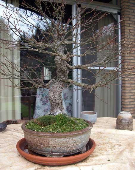 http://www.espritsdegoshin.fr/components/com_agora/img/members/33419_arbre-3.jpg