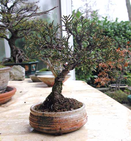 http://www.espritsdegoshin.fr/components/com_agora/img/members/33420_arbre-4.jpg