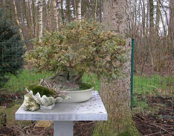 http://www.espritsdegoshin.fr/components/com_agora/img/members/33424_arbre-8.jpg