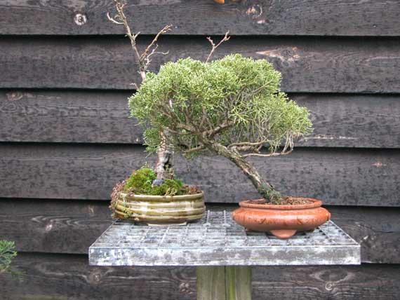 http://www.espritsdegoshin.fr/components/com_agora/img/members/33437_arbre-10.jpg