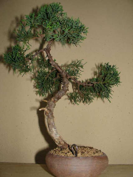http://www.espritsdegoshin.fr/components/com_agora/img/members/35526_juniperus_chinensis-1-20050419-24_106.jpg_thumb