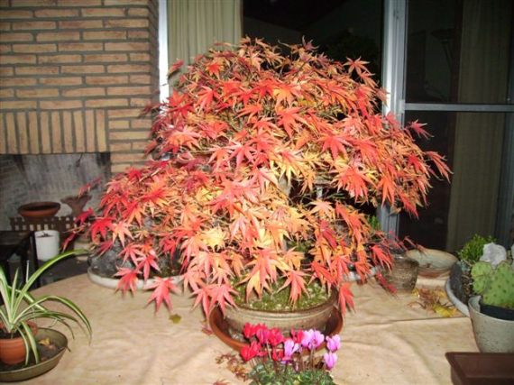 http://www.espritsdegoshin.fr/components/com_agora/img/members/35553_bonsai2.jpg_thumb