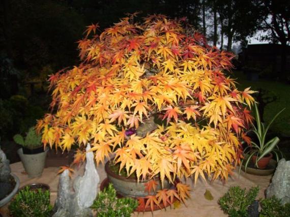 http://www.espritsdegoshin.fr/components/com_agora/img/members/35554_bonsai3.jpg_thumb