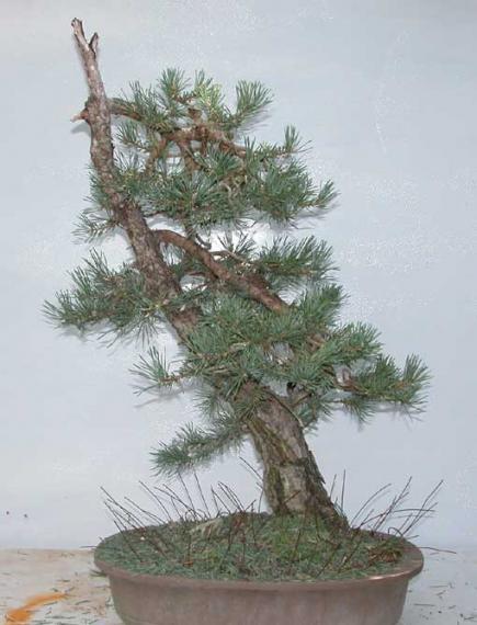 http://www.espritsdegoshin.fr/components/com_agora/img/members/35626_arbreapres_325.jpg_thumb