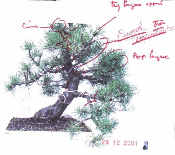 http://www.espritsdegoshin.fr/components/com_agora/img/members/36164_s_lect_bran_153.jpg_thumb