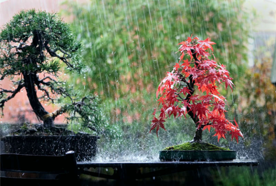 http://www.espritsdegoshin.fr/components/com_agora/img/members/3871/mini_Bonsai-and-Rain.jpg