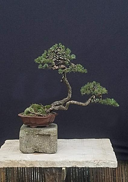http://www.espritsdegoshin.fr/components/com_agora/img/members/3918/mini_08012020-1446_arbre-modifié-21052019.jpg