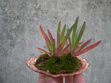 http://www.espritsdegoshin.fr/components/com_agora/img/members/3946_plante-accompagnement_473.jpg