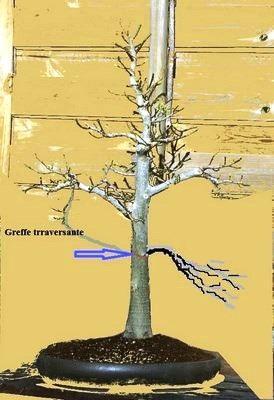 http://www.espritsdegoshin.fr/components/com_agora/img/members/3964/mini_mini-ficusraideur-Copier.jpg