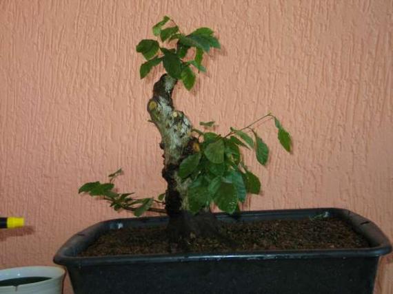 http://www.espritsdegoshin.fr/components/com_agora/img/members/39850__charme_2005_07_12_204.jpg_thumb